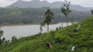 Workers hand pick tea leaves on the Dunkeld Tea Estate operated by MJF Holdings Ltds Dilmah Tea in Dickoya Central province Sri Lanka on Friday July...