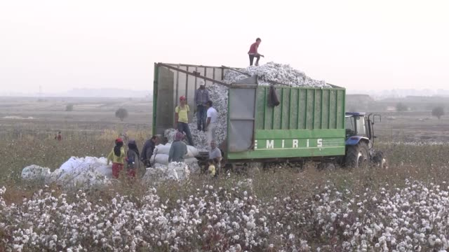 Workers harvest the cotton crop in a cotton field in Diyarbakir southeastern Turkey on November 15 2017