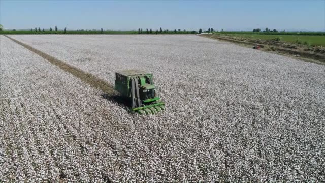 Workers harvest the cotton crop in a cotton field in the Cukurova district of Adana southern Turkey on October 13 2017