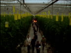 Workers leave large greenhouse at end of day