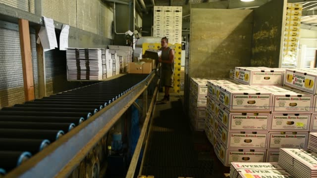 Workers package freshly harvested bananas from a conveyor into a box at the Liverpool River Bananas farm near Tully Queensland Australia on Tuesday...