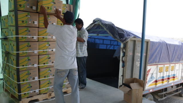 Workers preparing cases of banana for end transportation