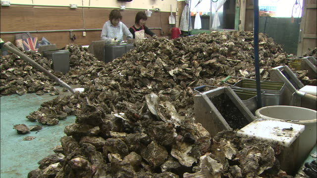 Workers shell oysters and toss the empty shells into giant piles at an oyster fishery in Higashihiroshima Japan.