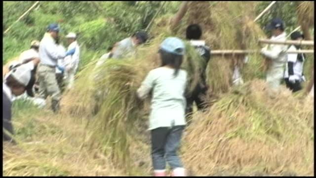 Workers stack sheaves of rice onto yozukuhade frames on a farm near Ota, Japan.