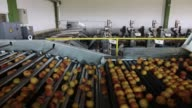Workers unload crates of freshly harvested clingstone peaches at the Agricultural Corporate Collaboration SA factory at Kouloura village in Veria...