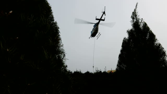 Workers use chainsaws to cut down Douglas Fir Christmas trees at the Holiday Tree Farms on November 18 2017 in Monroe Oregon