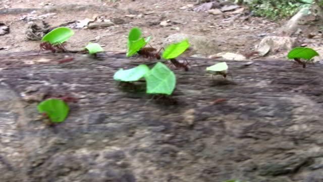 HD: Working ants