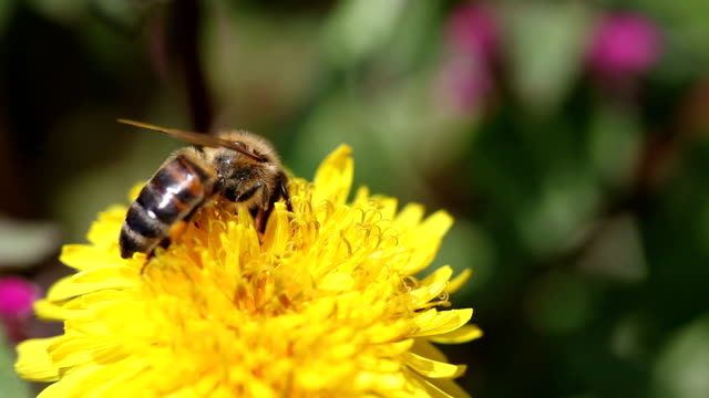 Working bee on the flower