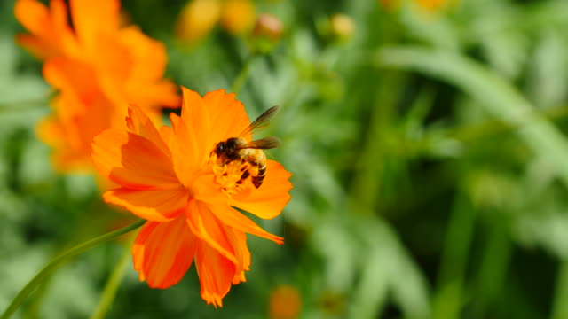 Working bee on the flower.