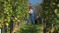 HD: Working In The Vineyard