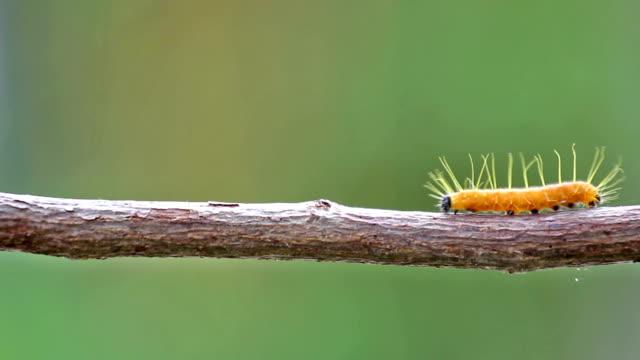 worm climbing on tree branch