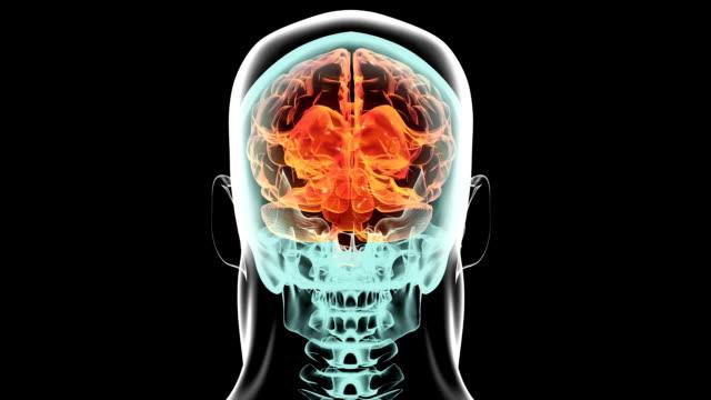 X-ray 360 degree brain inside skull body. Medical video background.