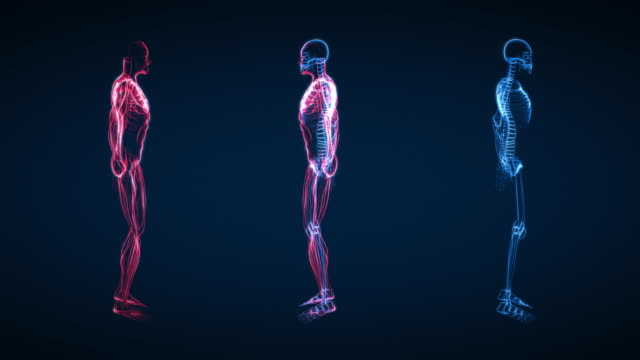 X-Ray of Human Skeleton & Muscle (HD)