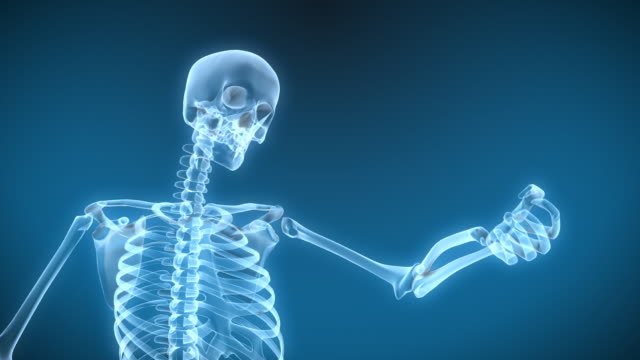 X-Ray Skeleton Arm move