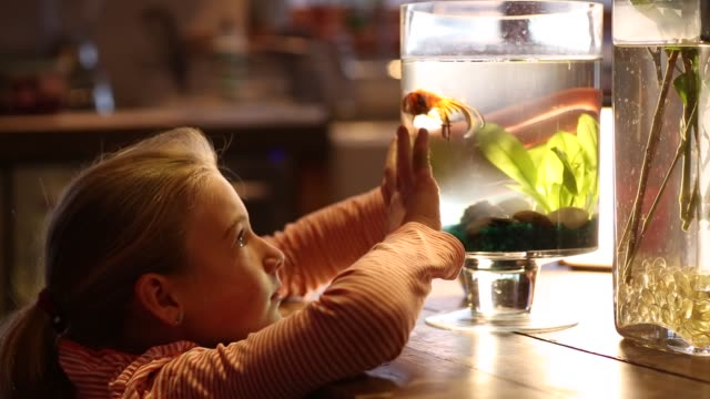 8 year old girl looking at her goldfish