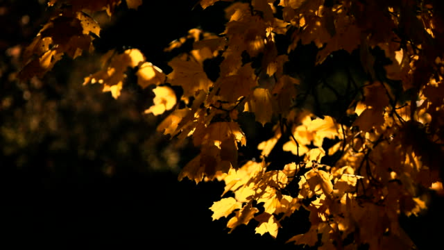 Yellow Autumn Background