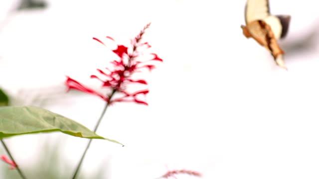 Gelbe Schmetterling Tanz mit Blume