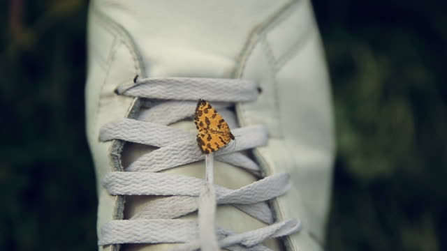A yellow butterfly on sneakers