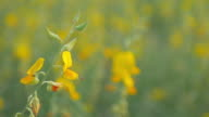 Yellow flower with green grass , Nature footage background
