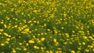 Gelbe Blumen Blüte