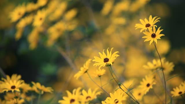 Gelbe Blumen im Herbst