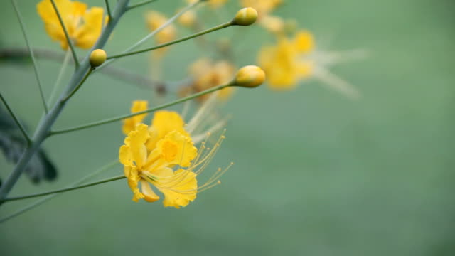 Yellow flowers over grass background.