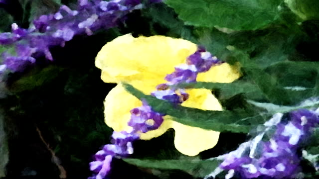 A yellow hibiscus flower and purple sage sway in a gentle breeze like a moving impressionistic painting.