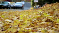 Yellow leaves on the ground as a car approaches in background