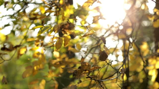 Gelbe Blätter im wind
