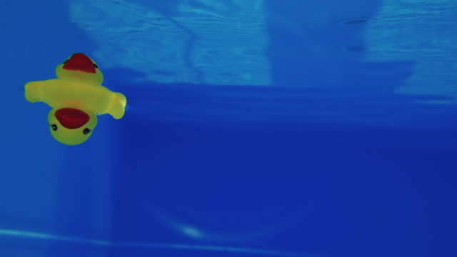 Yellow rubber duck floating underwater in a swimming pool