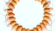 yellow shiny acorns, close-up