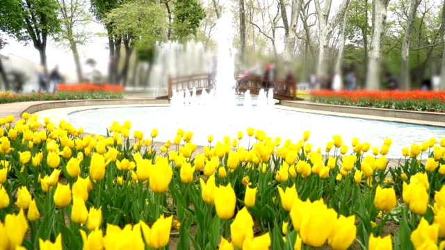 HD: Yellow Tulips - Stock video