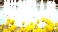HD: Gelbe Tulpen - Stock video