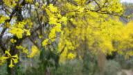 Yellower flower