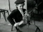 A Yorkshire Terrior barks as it's owner brushes his coat 1954