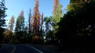 Yosemite National Park: Driving