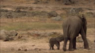 Young African elephant and his mother