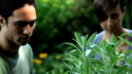 CU R/F Young couple inspecting and picking herbs in garden / Jersey City, New Jersey, USA