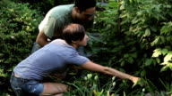MS Young couple inspecting plants in backyard garden / Jersey City, New Jersey, USA