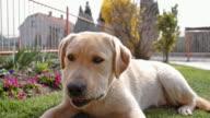 Young dog biting a bone