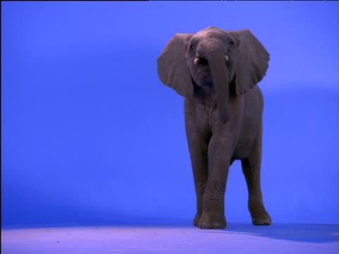 Young elephant peers around