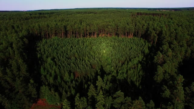 Young forest 4K aerial shot