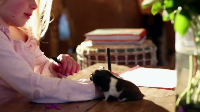 MS Young girl doing arts and crafts with her pet hamster / Lamy, New Mexico, United States