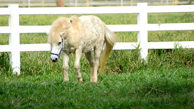 Young Horse eats grass in the field
