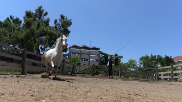Young man training arabic horses