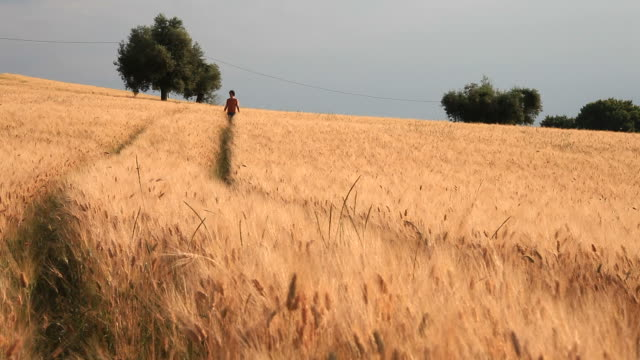 Young Man Walking in a Wheat Field, HD Video