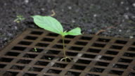 Young plant growing out of a gully