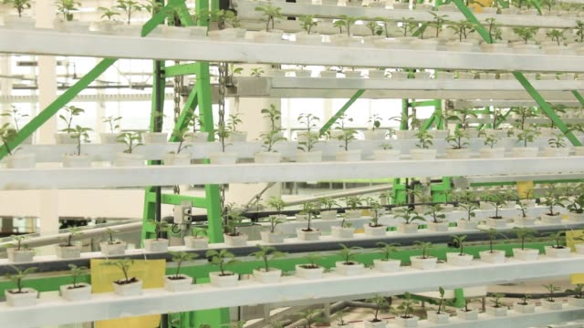 Young plants grow on the shelves of moving vertical farming racks inside a greenhouse at the hightech indoor Cofco Wisdom Farm operated by Cofco Corp...
