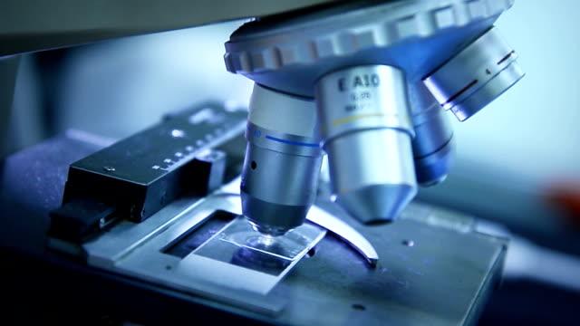 Junge Wissenschaftler arbeiten mit einem Mikroskop