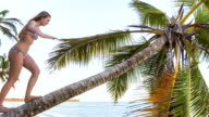 MS young woman climbing palm tree to look out over tropical beach